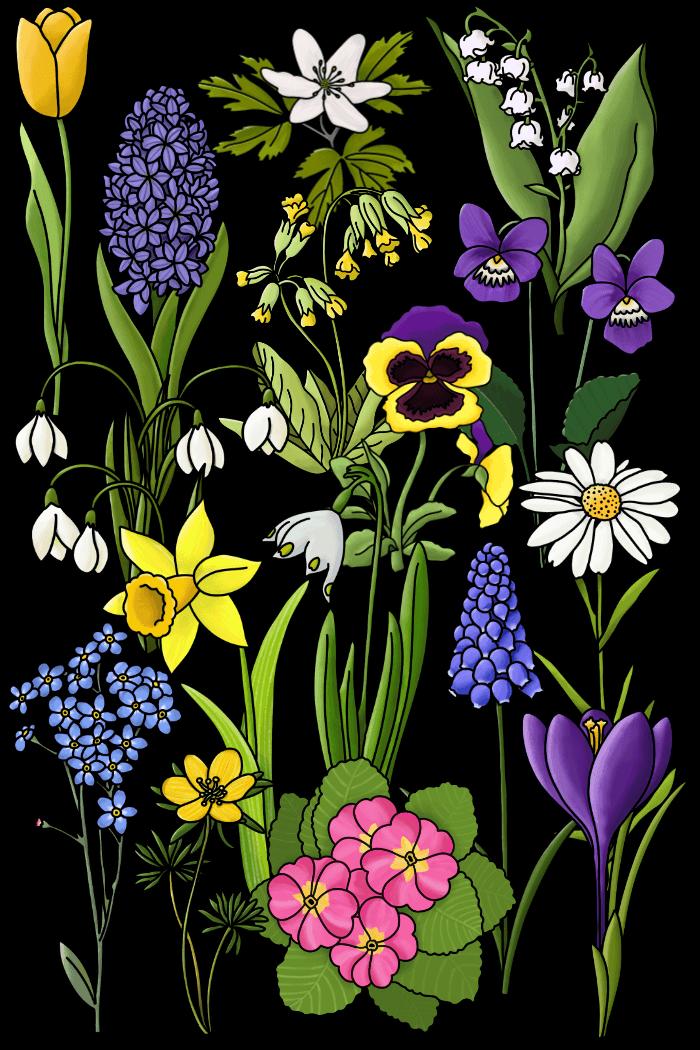 Frühblüher Cliparts