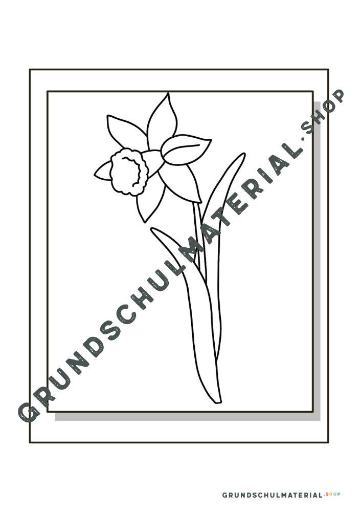 Materialpaket Frühblüher