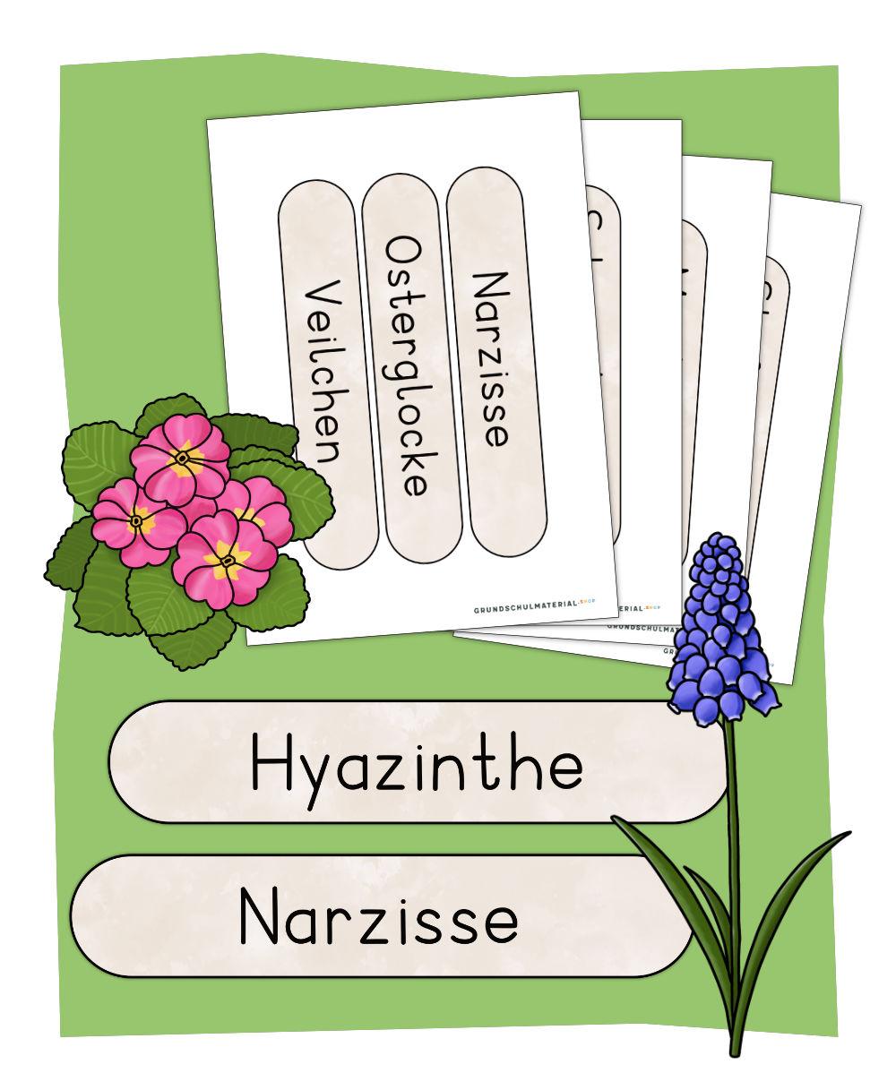 Frühblüher Tafelmaterial