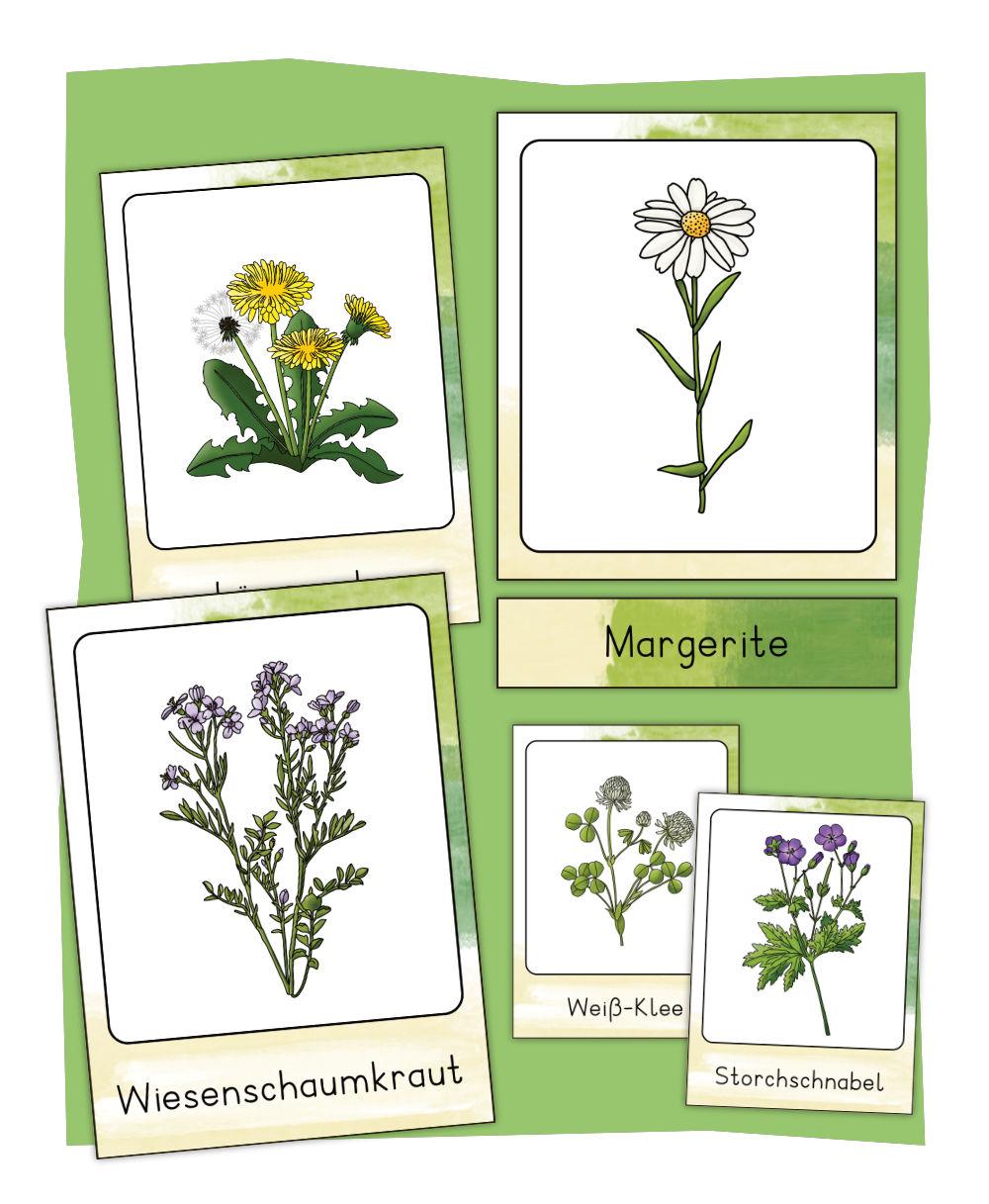 Wiesenblumen Bildkarten