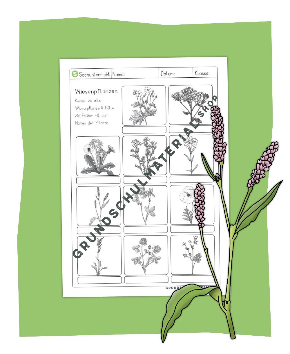Wiesenpflanzen Arbeitsblatt