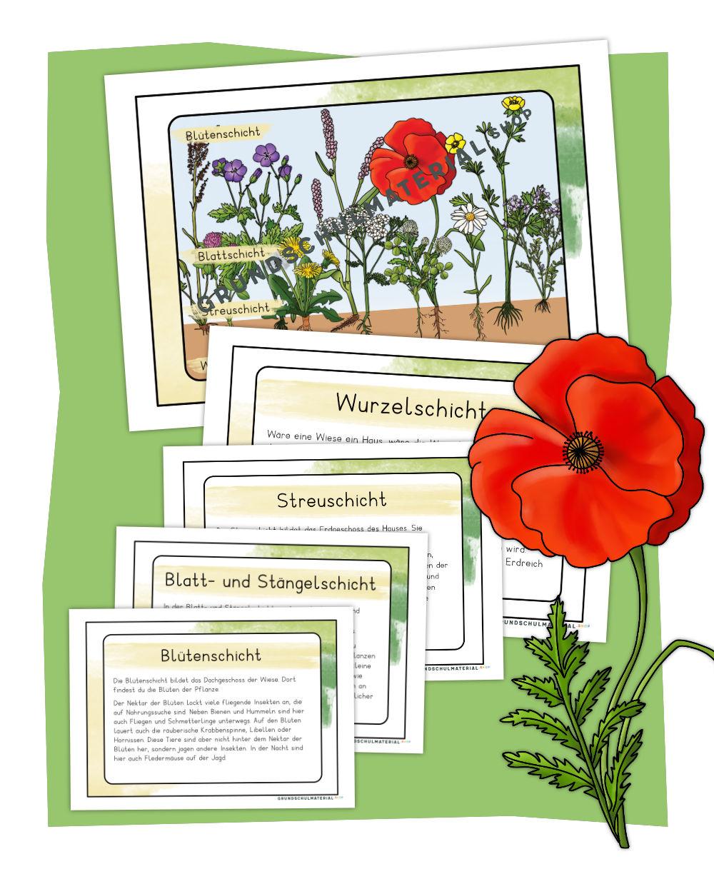 Stockwerke der Wiese Wissenskartei