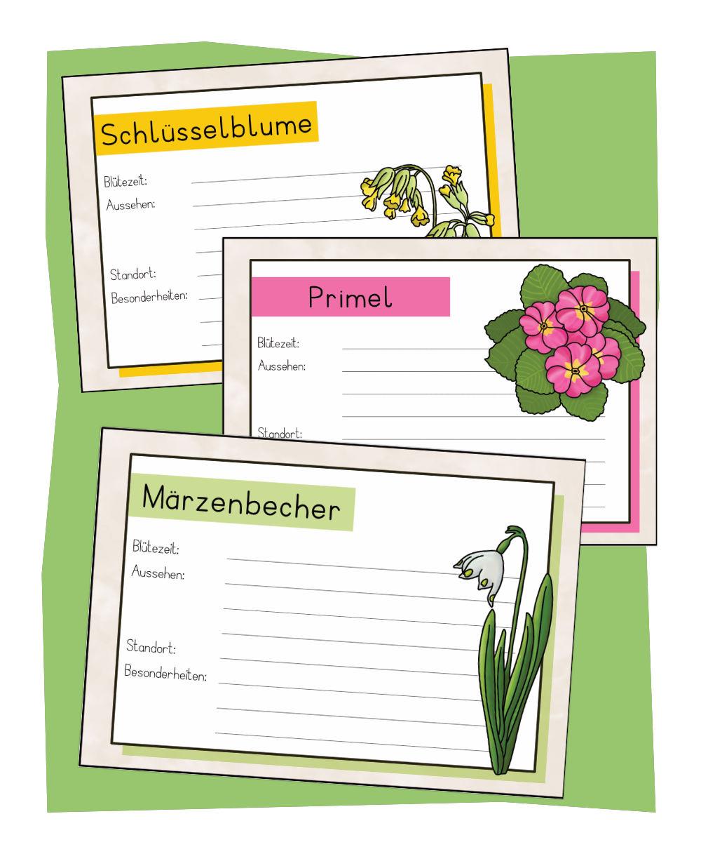 Frühblüher Steckbriefe